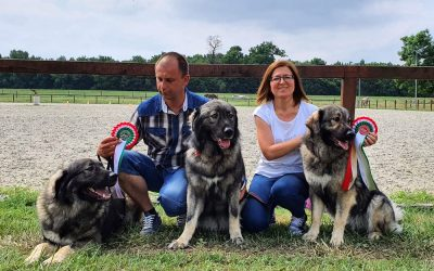 Bakony Gyöngyei Sárváron a nemzetközi kutyakiállításon